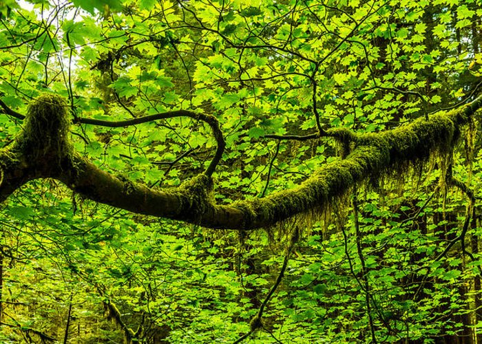 Tree Greeting Card featuring the photograph Lush by Chad Dutson