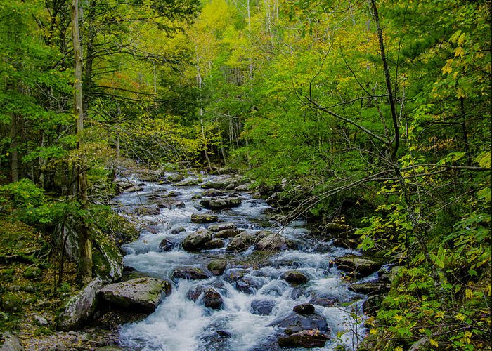 Stream Greeting Card featuring the photograph Lush Green by Michael Ray
