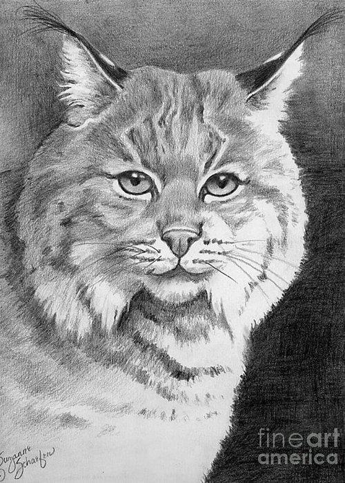 Wildcat Drawings Drawings Greeting Cards