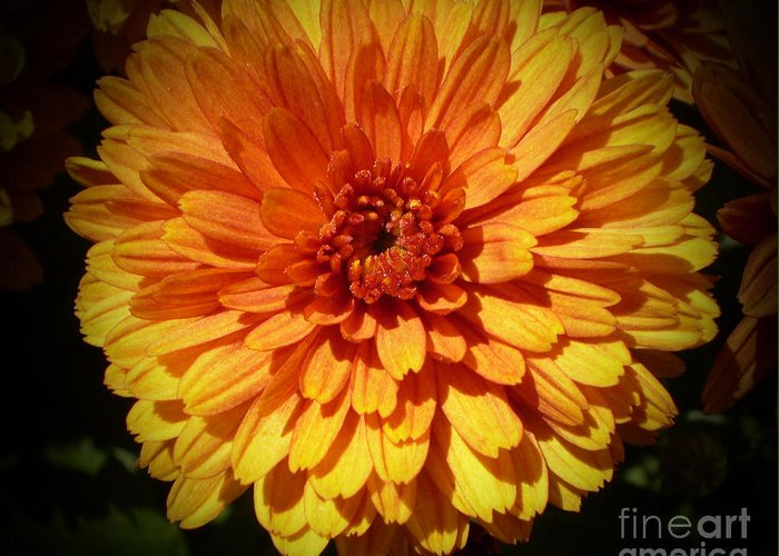 Bright Orange With Deep Reddish Orange Center Flower Greeting Card featuring the photograph M Bright Orange Flowers Collection No. Bof8 by Monica C Stovall