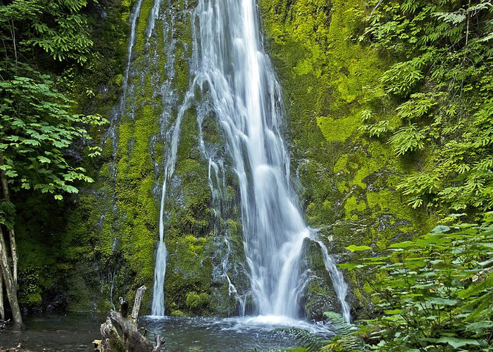 Water Greeting Card featuring the photograph Madison Creek Falls #1 by Roy Cage