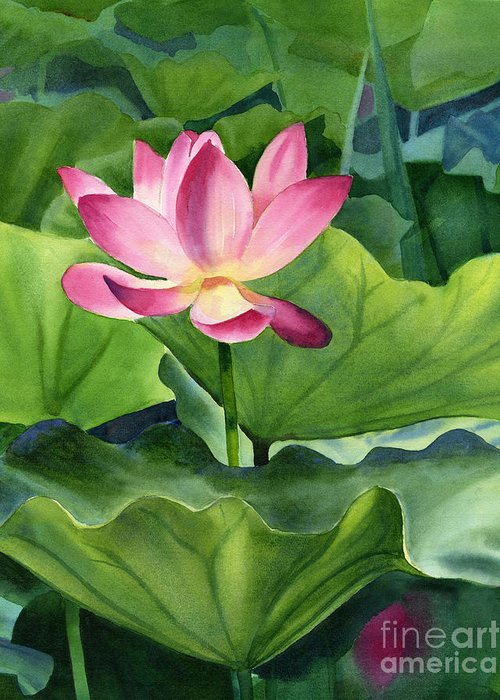 Pink Lotus Greeting Cards