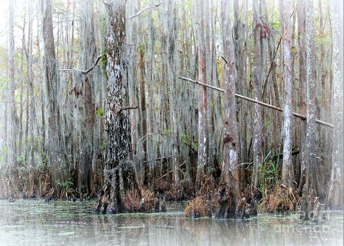 Louisiana Greeting Card featuring the photograph Magical Bayou by Carol Groenen