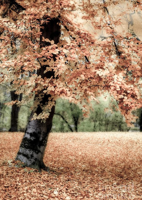 Autumn Greeting Card featuring the photograph Magical Fall by Hannes Cmarits