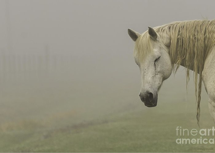 Nature Greeting Card featuring the photograph Magical White Horse by Cindy Bryant