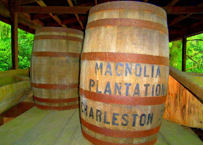 Magnolia Plantation Greeting Card featuring the photograph Magnolia Brew 2 by Ron Kandt