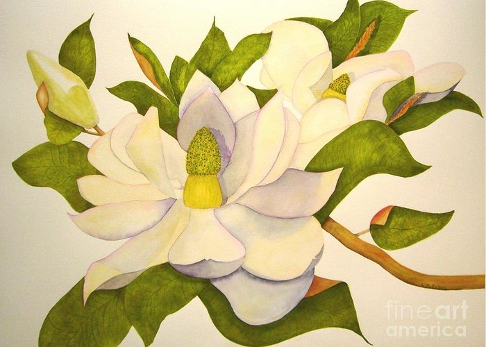 Magnolia Greeting Card featuring the painting Magnolia Cluster by Lynda Evans