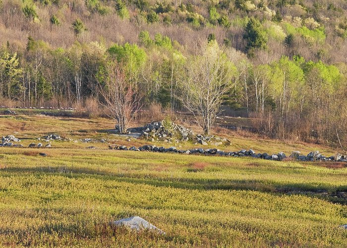 Blueberry Greeting Card featuring the photograph Maine Blueberry Field In Spring by Keith Webber Jr