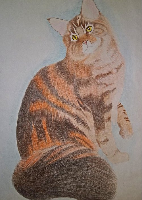 Cat Greeting Card featuring the drawing Maine Coon Cat by Gregory Murray