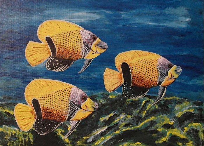 Majestic Angelfish Greeting Cards