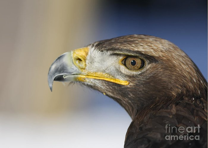 Art Cards Greeting Card featuring the photograph Majestic Golden Eagle by Inspired Nature Photography Fine Art Photography