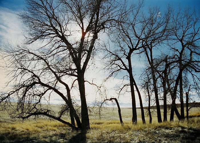 Trees Greeting Card featuring the photograph Make A Stand by Ric Bascobert