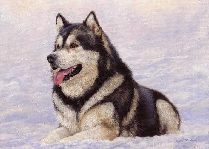 Malamute Greeting Card featuring the painting Malamute by David Stribbling