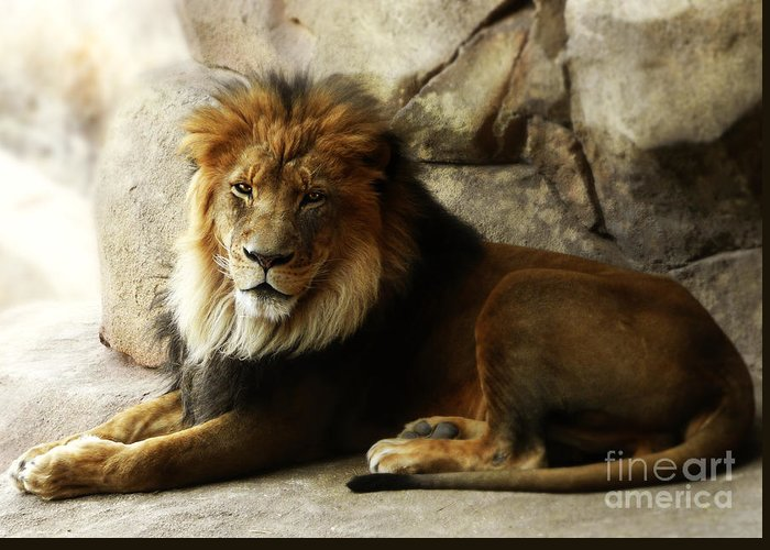 Lion Greeting Card featuring the photograph Male Lion At Rest by Elle Arden Walby