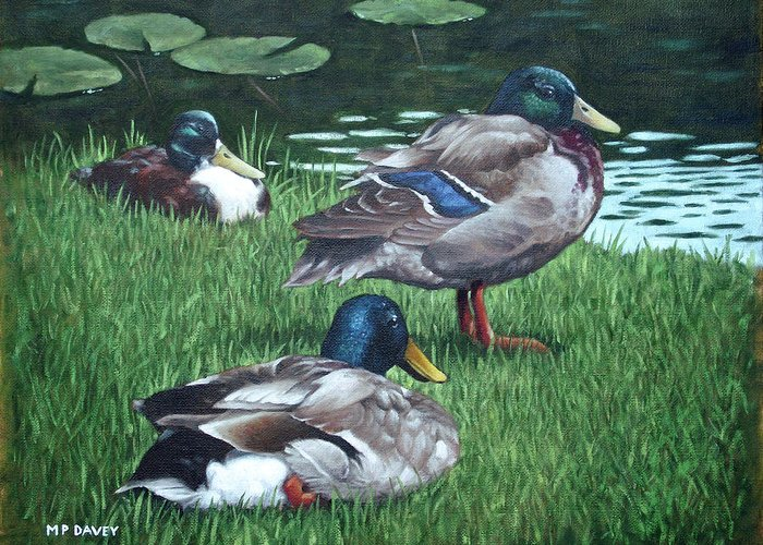 Mallard Greeting Card featuring the painting Mallards On River Bank by Martin Davey