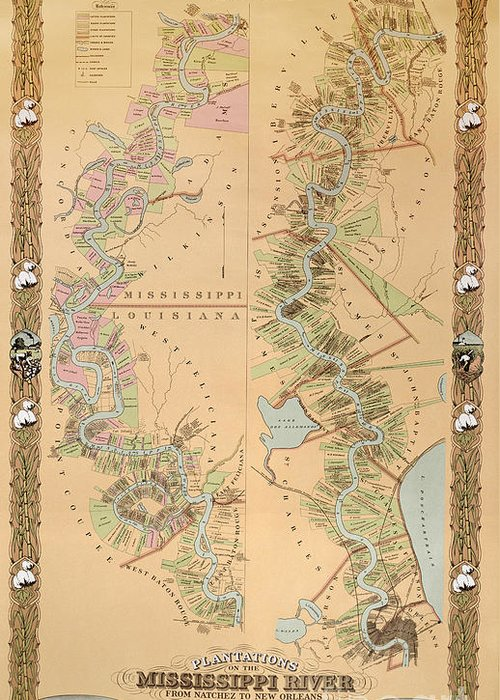 Map Depicting Plantations On The Mississippi River From Natchez To New Greeting Cards
