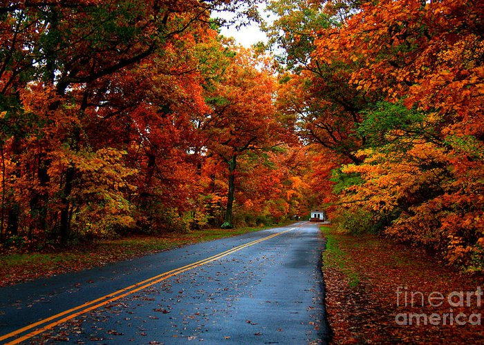 Trees Greeting Card featuring the photograph Maple Road by Valerie Fuqua