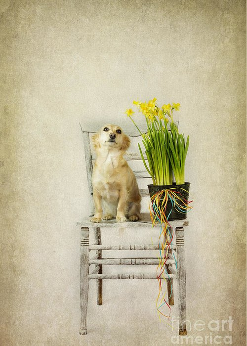 March Greeting Card featuring the photograph March by Elena Nosyreva