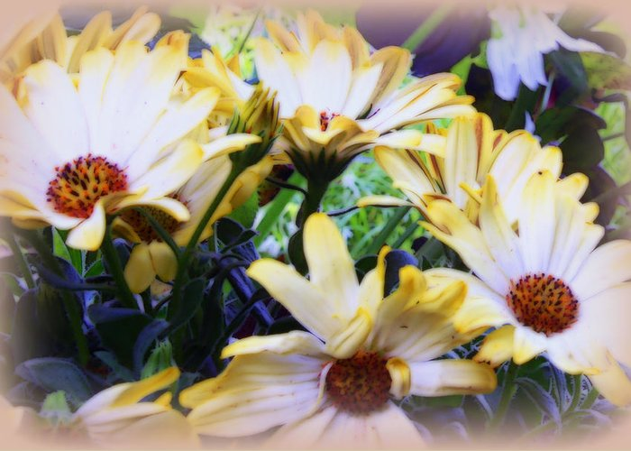 Marigolds Greeting Card featuring the photograph Marigold Blooms by Carol Hynes
