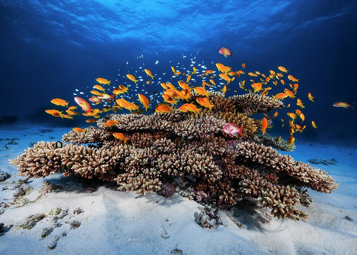 Reef Greeting Cards