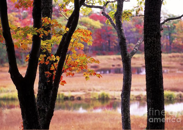 Fall Greeting Card featuring the photograph Marsh In Fall by Jim Block