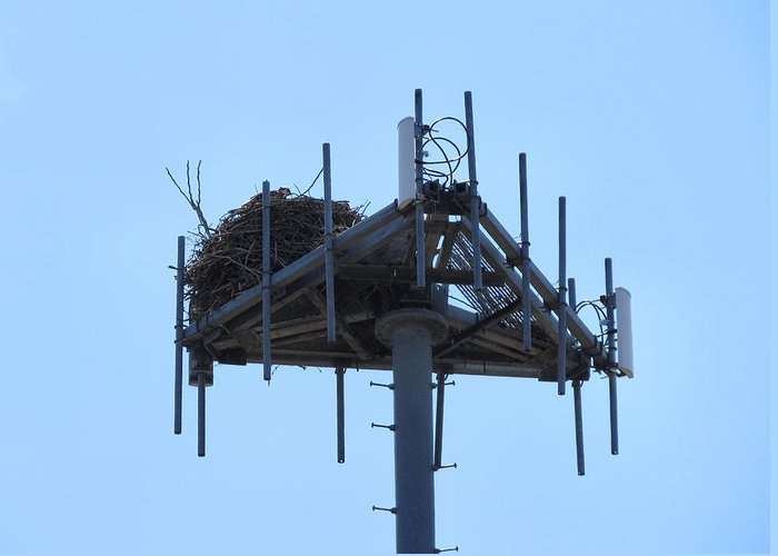 Nest Greeting Card featuring the photograph Massaive Nesting by Art Dingo