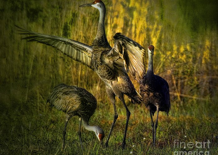 Birds Greeting Card featuring the digital art May I Have This Dance by Lianne Schneider