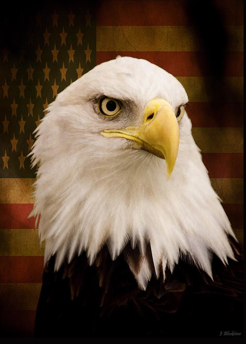 May Your Heart Soar Like An Eagle Greeting Card featuring the photograph May Your Heart Soar Like An Eagle by Jordan Blackstone