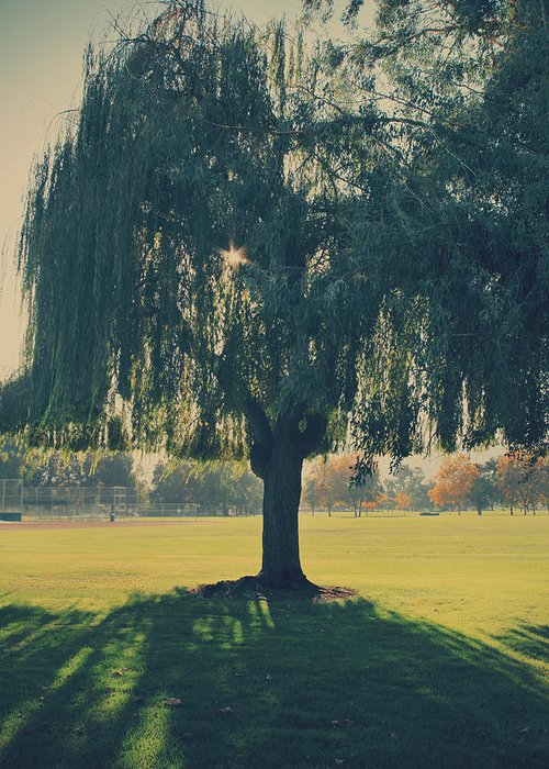 Trees Greeting Card featuring the photograph Maybe We'll Find It Someday by Laurie Search