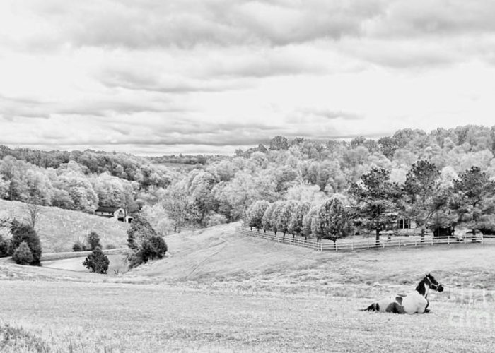 Tennessee Greeting Card featuring the photograph Meadow Bw by Chuck Kuhn