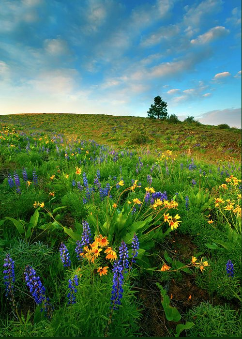Meadow Greeting Card featuring the photograph Meadow Gold by Mike Dawson