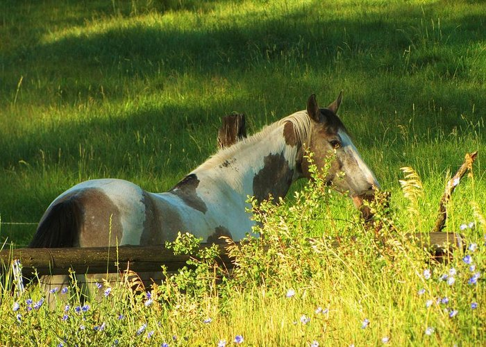Horse Greeting Card featuring the photograph Meet Me At The Fence by Feva Fotos