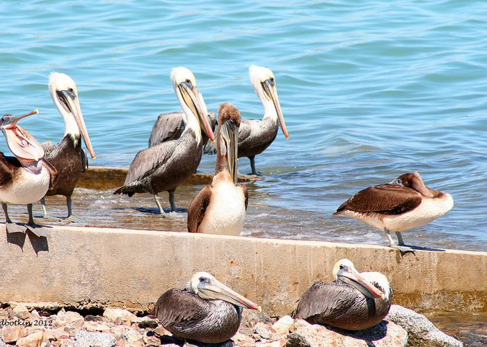 Pelican Greeting Card featuring the photograph Meeting Of The Board by Dick Botkin