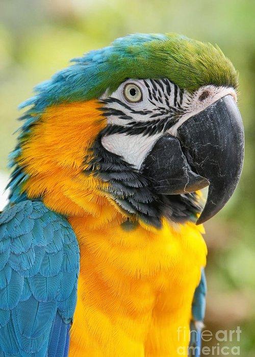 Mele E Manono Ia Ea Macaw Greeting Cards