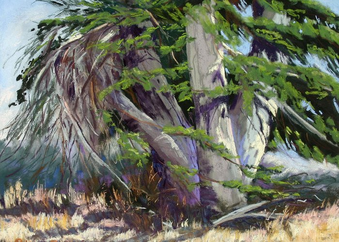 Plein Air Pastel Landscape Of An Old Cypress Tree Greeting Card featuring the pastel Mendocino Cypress II by Patricia Rose Ford