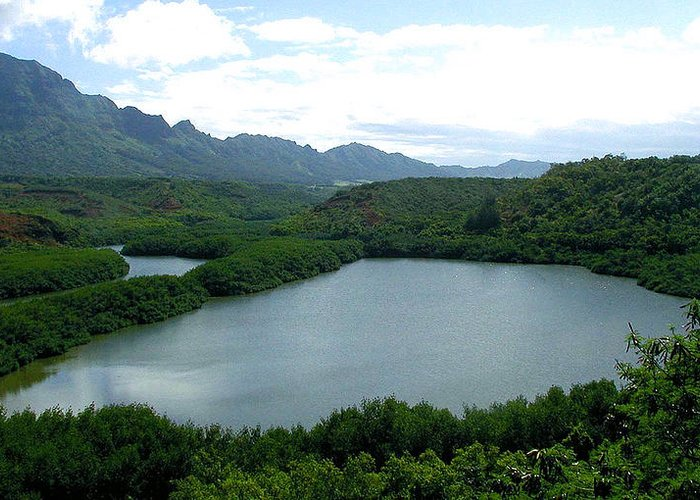 Fish Pond Greeting Card featuring the photograph Endangered Menehune Fishpond by Jean Hall
