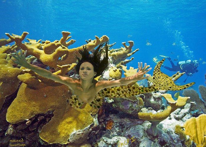 Mermaid Greeting Card featuring the photograph Mermaid Camoflauge by Paula Porterfield-Izzo