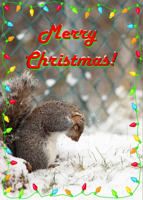 Merry Christmas Greeting Card featuring the photograph Merry Christmas by Robin Martin