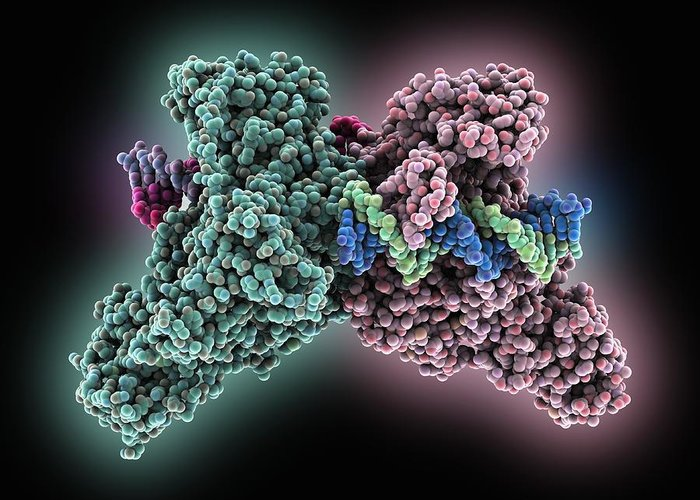Dna Methyltransferase-1 Greeting Card featuring the photograph Methyltransferase Complexed With Dna by Science Photo Library