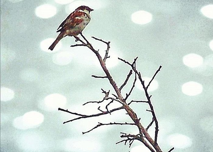 Life Greeting Card featuring the photograph #mgmarts #bird #nature #life #bestpic by Marianna Mills