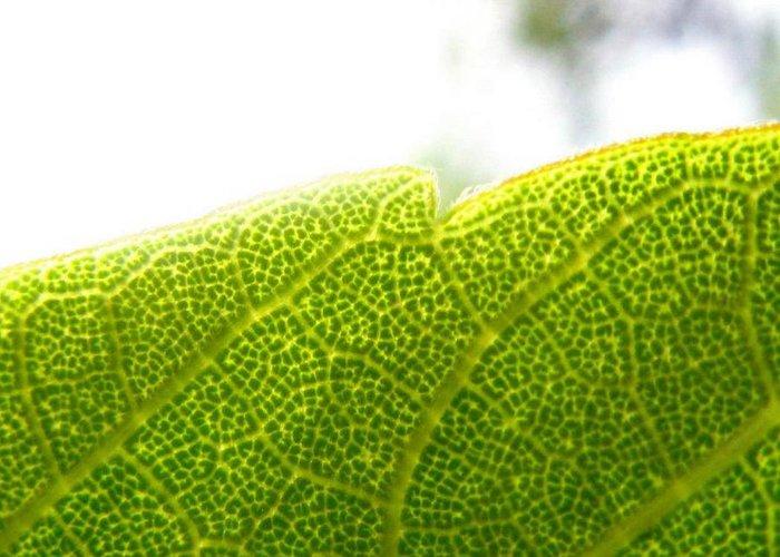 Leaf Greeting Card featuring the photograph Micro Leaf by Rhonda Barrett