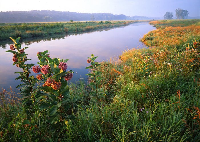 Sunset Greeting Card featuring the photograph Milk Weed Morning by Ray Mathis