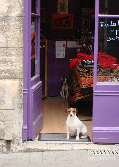 French Dogs Greeting Card featuring the photograph Minding The Shop. Two French Dogs In Boutique by Menega Sabidussi