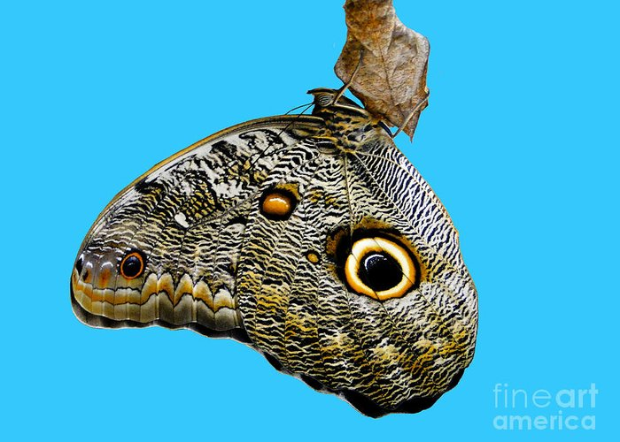 Butterfly Greeting Card featuring the photograph Mindo Butterfly by Al Bourassa
