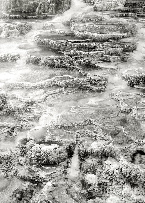 America Greeting Card featuring the photograph Minerva Springs In Black And White Yellowstone National Park Wyoming by Dave Welling