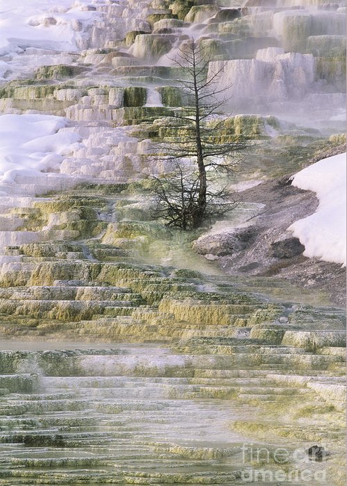 North America Greeting Card featuring the photograph Minerva Springs Terraces Yellowstone National Park by Dave Welling