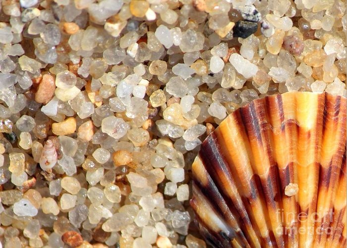 Shell Shells Vacation Vacations vacation At The Beach Beach Beaches Rocks Agates Small Tiny colors Of The Beach Sand Sandy Nature Natural natural Colors beach Cards beach Art Seaside Coastal Greeting Card featuring the photograph Mini Beach Vacation by Carol Groenen