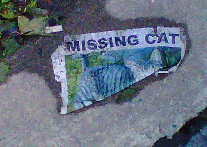 Missing Greeting Card featuring the digital art Missing Cat by Dawn Sloane