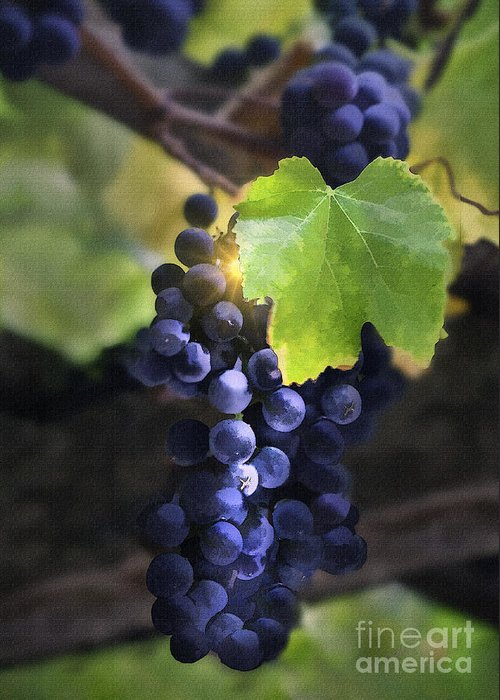Grapes Greeting Card featuring the digital art Mission Grapes II by Sharon Foster