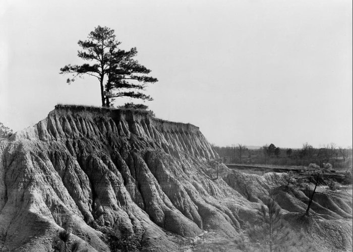 1936 Greeting Card featuring the photograph Mississippi Erosion, 1936 by Granger